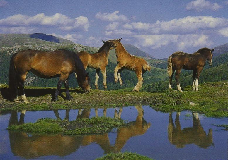 Combien De Chevaux : album photos calendrier de l 39 avent 2011 combien de chevaux equivista le site ~ Medecine-chirurgie-esthetiques.com Avis de Voitures